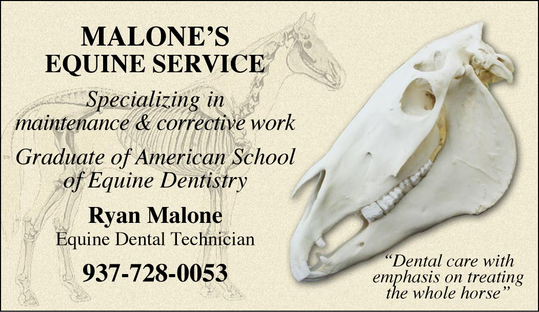 Custom Business Cards - Horse Anatomy/Skull design-www.hoofprints.com
