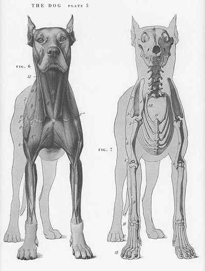 An Atlas Of Animal Anatomy For Artists Hoofprints