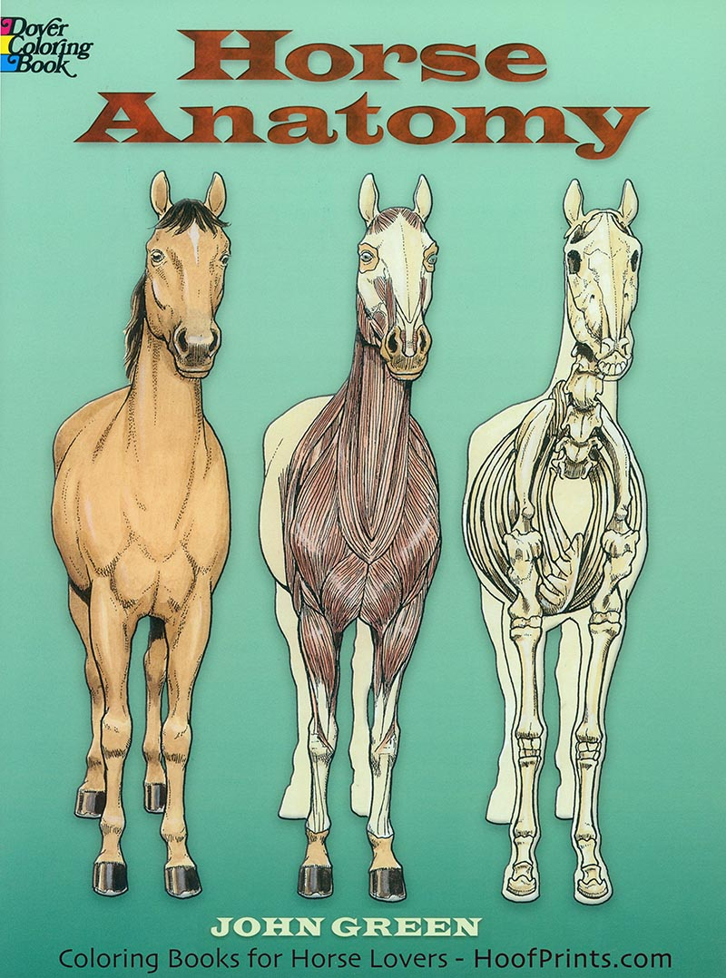 Horse Anatomy Coloring Book-www.hoofprints.com