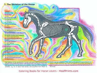 Horse Anatomy Coloring Book Www Hoofprints Com