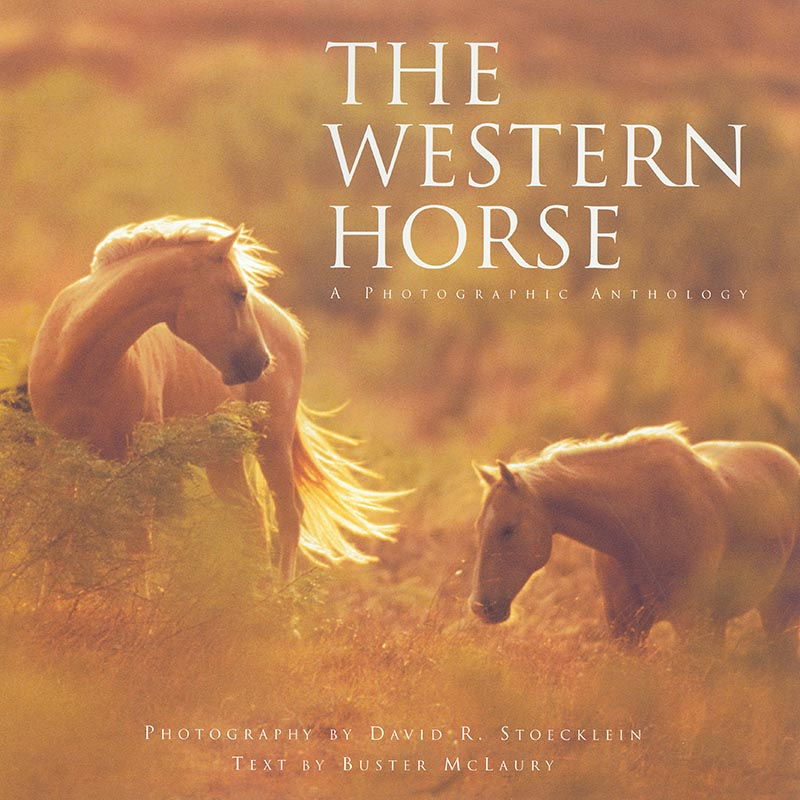 The Western Horse Coffee Table Book   A Photographic Anthology By David  Stoecklein
