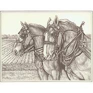 Buster & Bud Signed and numbered Belgian horse print by Gina Keesling