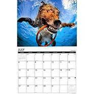 2014 Underwater Dogs Wall Calendar  ***NOTE 2014***
