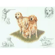 Golden Retrievers Print by Nigel Hemming  ONLY ONE AVAILABLE