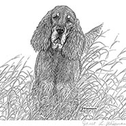 In The Grass Gordon Setter Signed & Numbered Limited Edition Print by Janet Wissman ONLY ONE AVAILABLE
