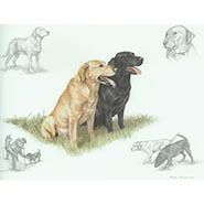 Labradors Print by Nigel Hemming  ONLY ONE AVAILABLE