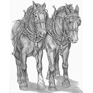 Draft Horse Team signed print by Gina Keesling