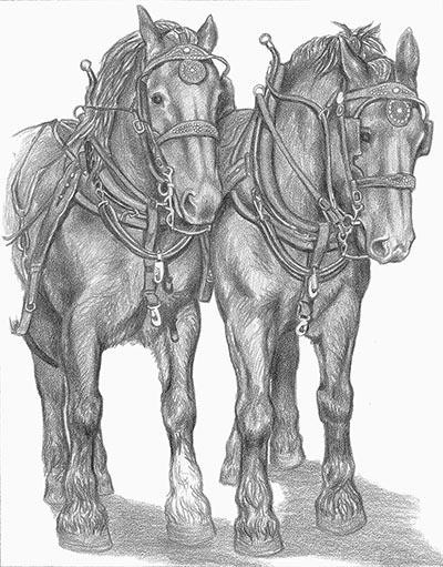 Draft Horse Team Signed Print By Gina Keesling Www Hoofprints Com