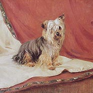 Peter Pipkin Yorkshire Terrier Print by George Stokes ONLY ONE AVAILABLE