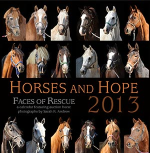 Horses and Hope 2013 Calendar