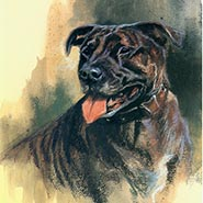 Staffordshire Bull Terrier Signed & Numbered Limited Edition Print by Mick Cawston ONLY ONE AVAILABLE