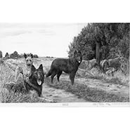 Taking Five - Belgian Shepherd Dogs by Mike Sibley  ONLY ONE AVAILABLE