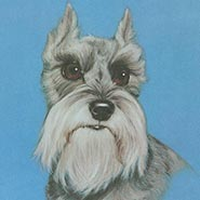 Whiskers Schnauzer Dog Print by Robert Guzman Forbes